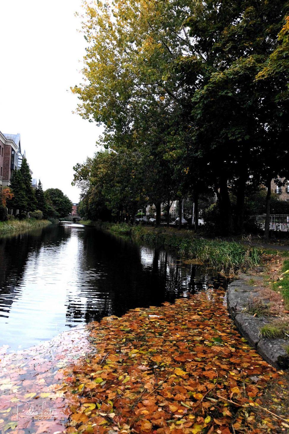 Autumn in Dublin